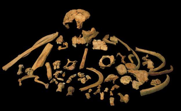 Fósiles de 'Homo antecessor' encontrados en el nivel TD6 de Gran Dolina, en atapuerca. /José María Bermúdez de Castro
