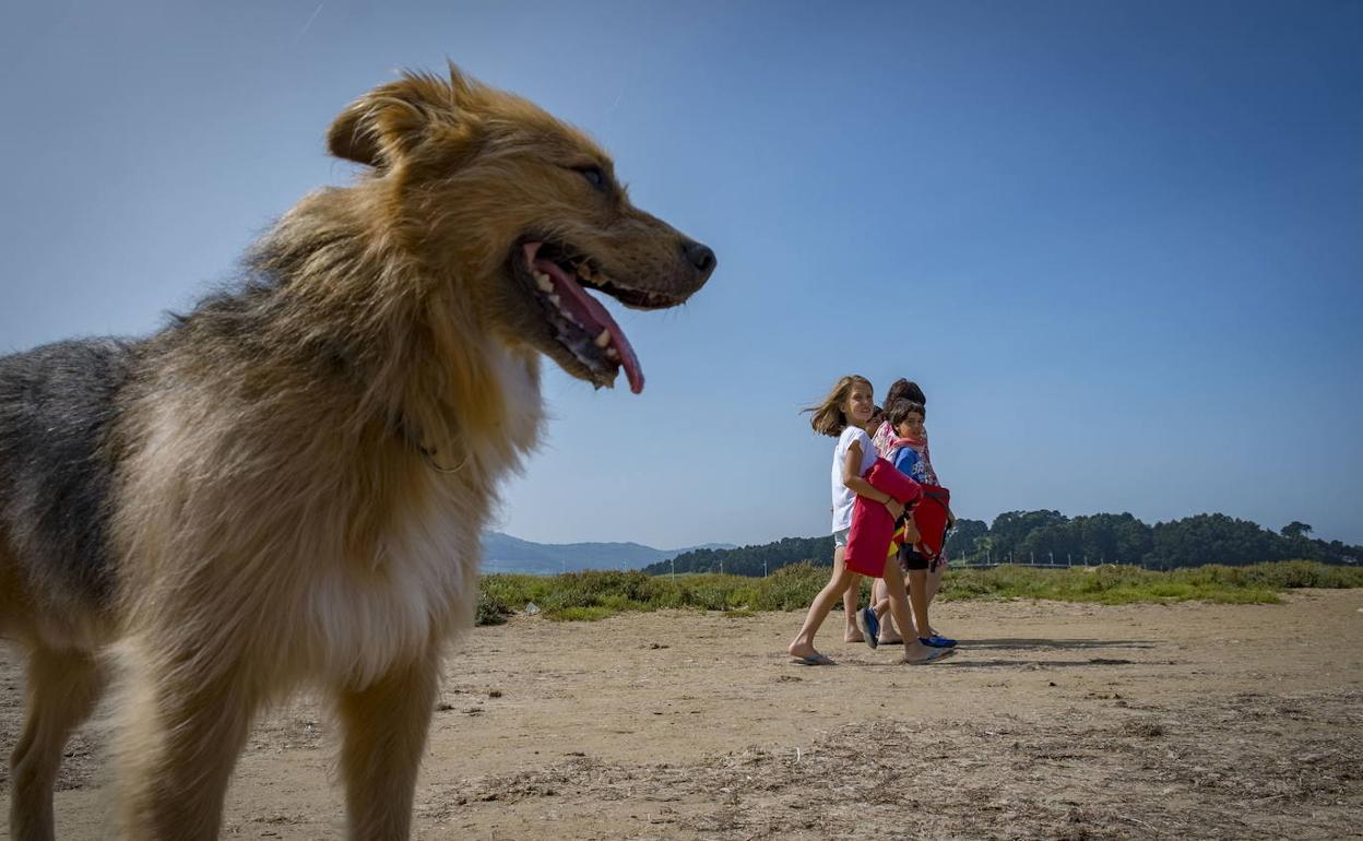 6 Playas De Cantabria Que Admiten Perros En 2019 El Correo