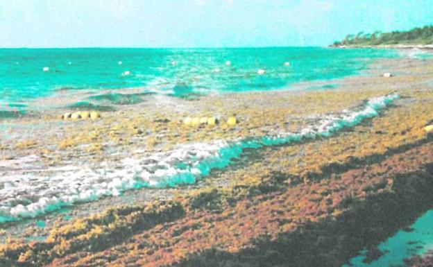 Así se encontró la familia bilbaína la playa donde pasó sus vacaciones. /el correo
